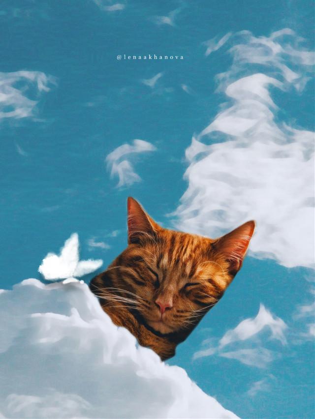 #sleeping #cat #sky  — —☁️☁️🐈
