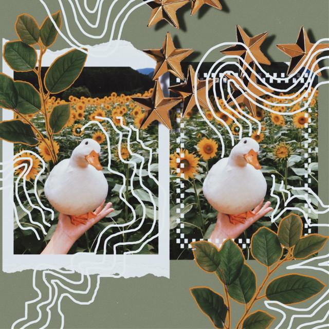 duck in sunflower field               #aesthetic #duck #animal #sunflower #green #grunge #greenaesthetic #cute #nature #naturesbeauty #gold #leaf #flower #doodle #outline #white #cool #interesting