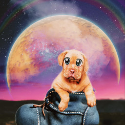freetoedit raimbow makeawesome art pets eccartoonifiedanimals