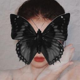 蝴蝶 butterfly 挡脸 纹理