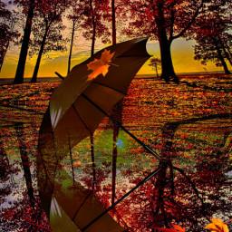 landscape autumn sunset umbrella freetoedit srcyellowumbrella yellowumbrella
