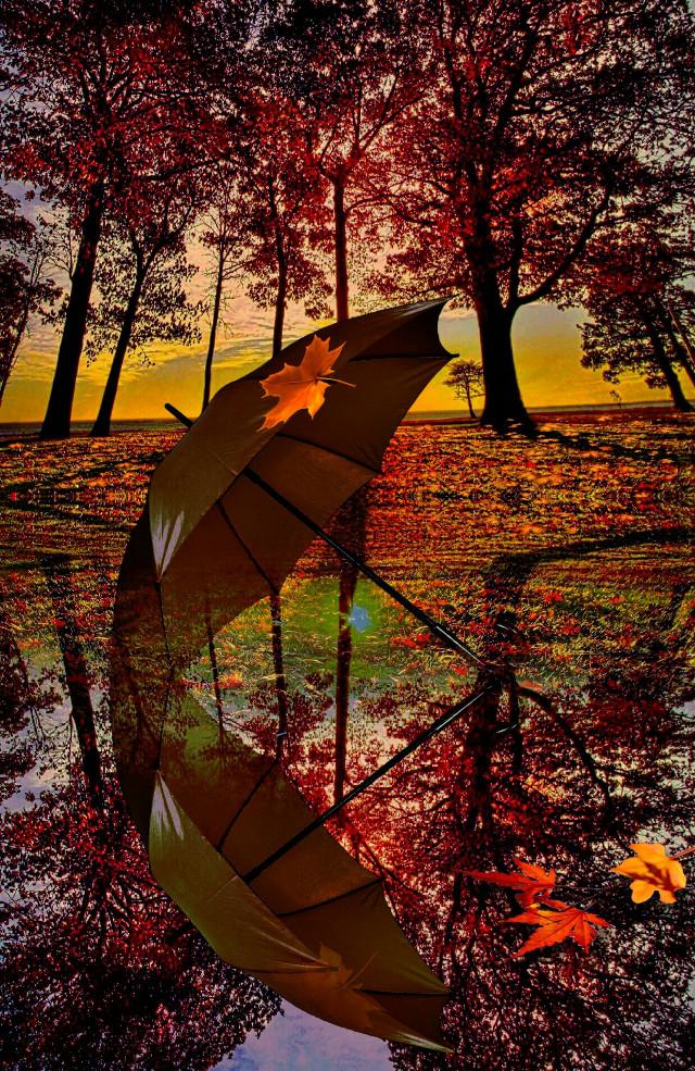 #landscape #autumn #sunset #umbrella