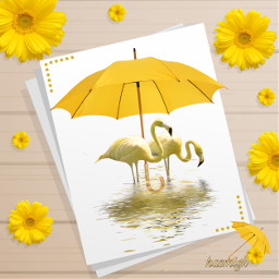 yellow umbrella flowers paper flamingo water frame background editedwithpicsart picsart heypicsart freetoedit srcyellowumbrella yellowumbrella