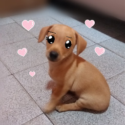 dog cute pets cutepets cutedog🐶 cutedogs animals cuteanimegirl animeedit freetoedit cutedog eccartoonifiedanimals cartoonifiedanimals