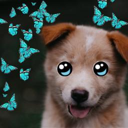 picsart lovely dog eccartoonifiedanimals cartoonifiedanimals freetoedit