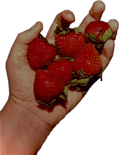 strawberry strawberries interesting art photography nature naturephotography fruit food indie cottagecore aesthetic aestheticsticker aestheticphotography freetoedit