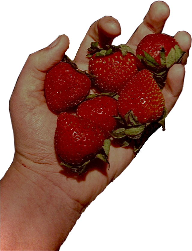#strawberry #strawberries #interesting #art #photography #nature #naturephotography #fruit #food #indie #cottagecore #aesthetic #aestheticsticker #aestheticphotography