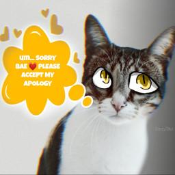 kitty apologize freetoedit