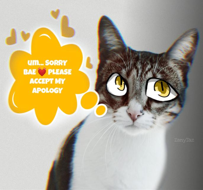 #kitty on way to #apologize #freetoedit