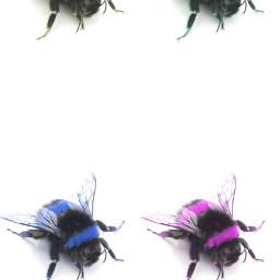 freetoedit remixit hummel popart photography myphotography myedit📷 colours popartcolors myedit