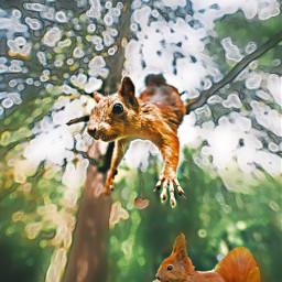 samriddhagaire london squirrel irchangtime hangtime freetoedit