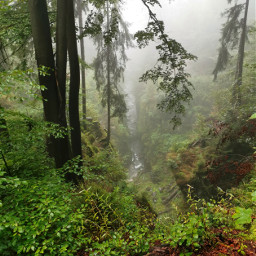 forest river mountains rocks beautifulnature fogg foggyday myphoto summer summertime freetoedit