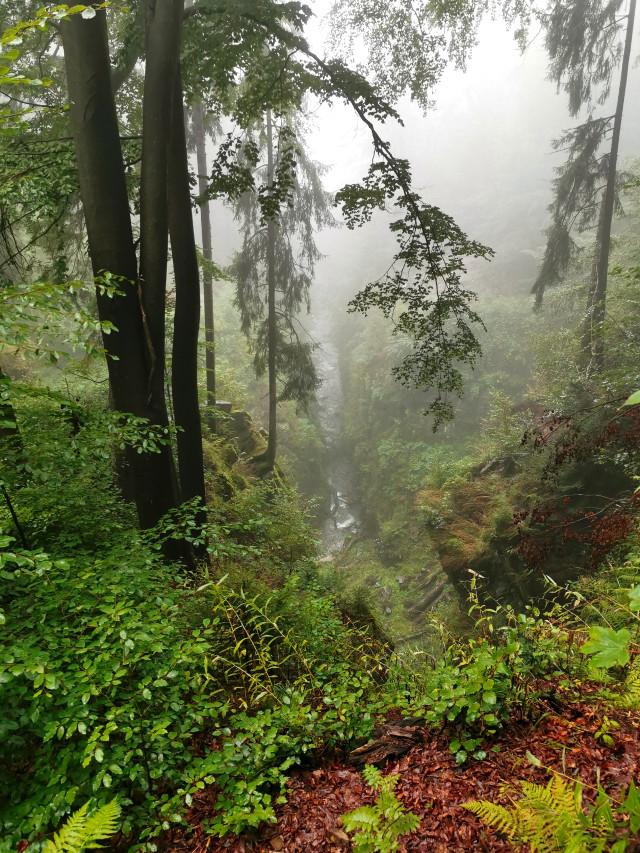 #forest #river #mountains #rocks #beautifulnature #fogg #foggyday #myphoto #summer #summertime