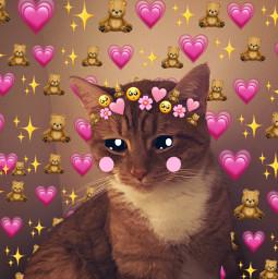 cat catchallenge picture myownpicture myownpic mycat kitty hearts teddy teddybear sparkle emoji crown cartoon eyes challenge cartooneyeschallenge eccartoonifiedanimals cartoonifiedanimals freetoedit