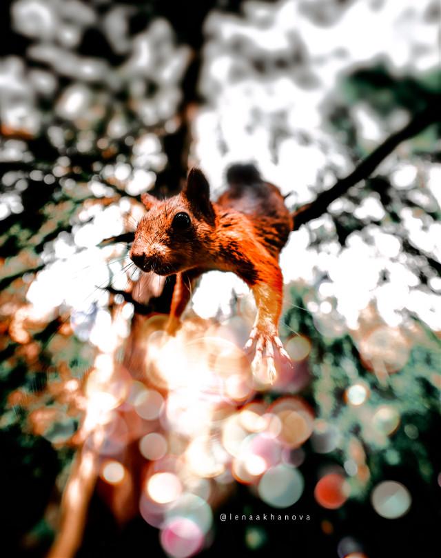 #freetoedit#squirrel #forest #magic  — — 🐿 https://youtu.be/bHfiu46LFmo --
