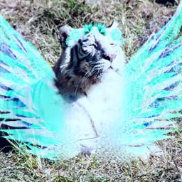 unsplash tiger pleasevote4me srcneonwings neonwings freetoedit