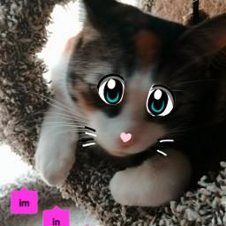 freetoedit eccartoonifiedanimals cartoonifiedanimals iminlove kittiecat