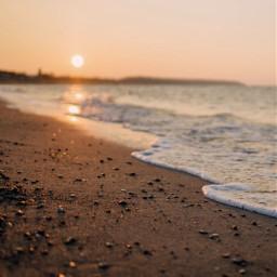 freetoedit beachday seashells sunset
