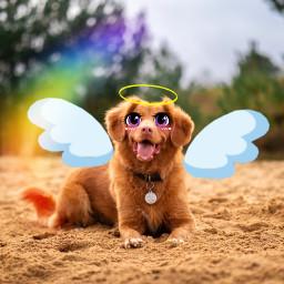 unsplash cartoon voteforme dog cartooneyes cute cutecheecks cutedog wings halo angle edited puppy cool interesting nature eccartoonifiedanimals cartoonifiedanimals freetoedit