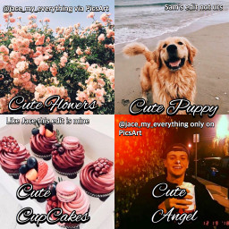 jacenorman puppy cupcakes flowers