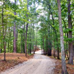 freetoedit outdoors nature naturelover road