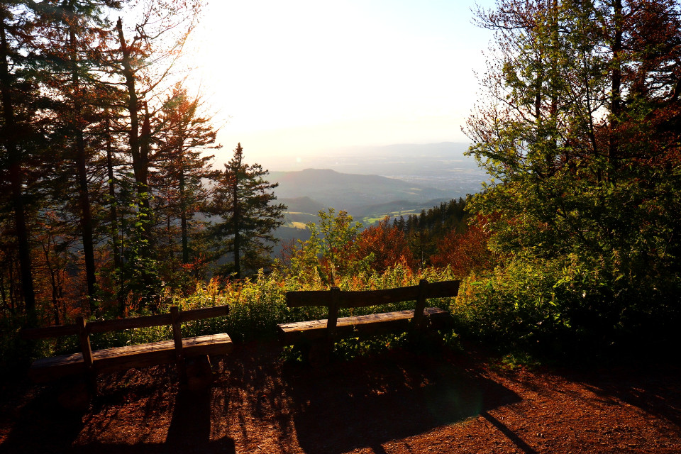 #freetoedit #germany #blackforest #hiking #nature #landscape #view #scenery #forest #trees #mountains #bench #relax #eveningmood #sun #light #colors #beautifulday #loveit