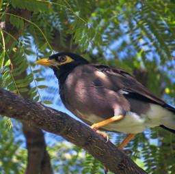 freetoedit hawaii bird birds wildlife nature outdoors photography summer interesting animals tropical