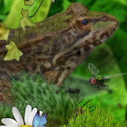 froglife butterfly fly green grass daisy ivy freetoedit