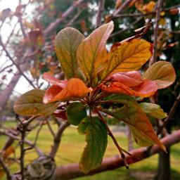 leaves september2020 seasons details nature
