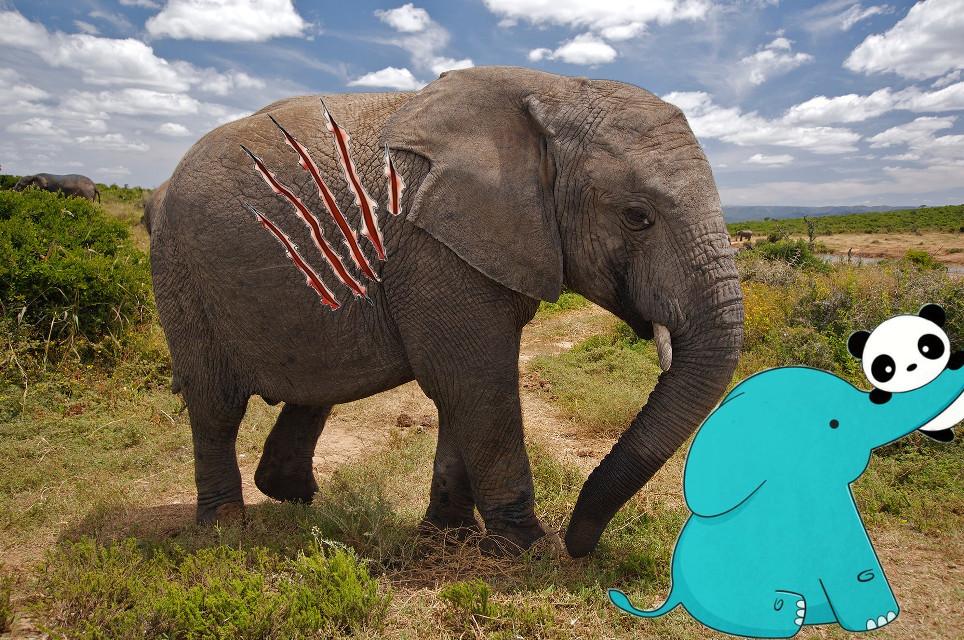 Elaphants are endangerd