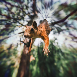 freetoedit falling squirrel forest idk scifi