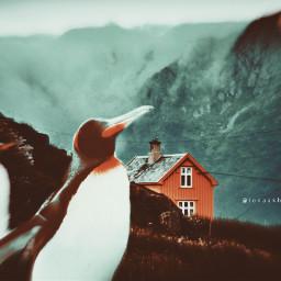 nature animals penguins home