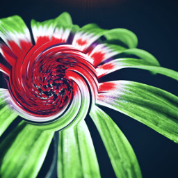 freetoedit flower swirl surrealart surrealist