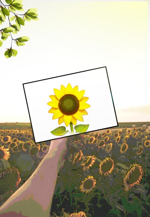 #remixit #imageremixchallenge #sunflower #sunflowers #watercoloreffect #scenery