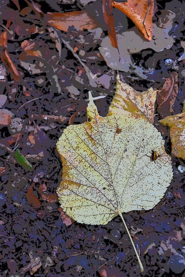 #freetoedit #leaf #leaves #fall #september