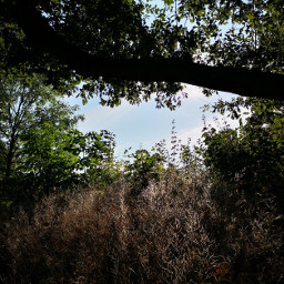 niceview tree freetoedit