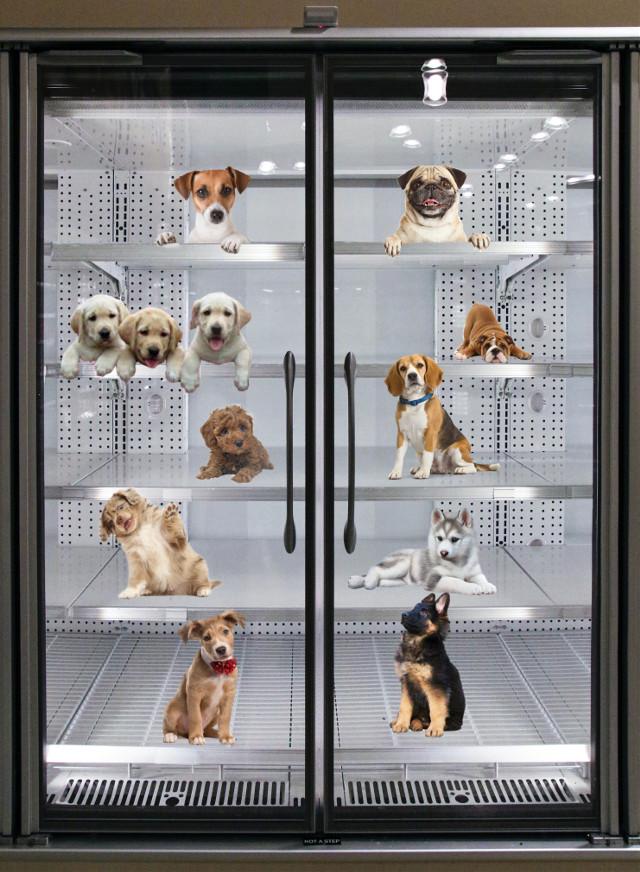 #puppies #cute #fridge #winner #vote #interesting
