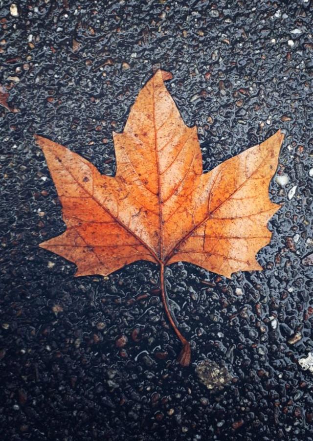 #fall #nature #autumn #photography