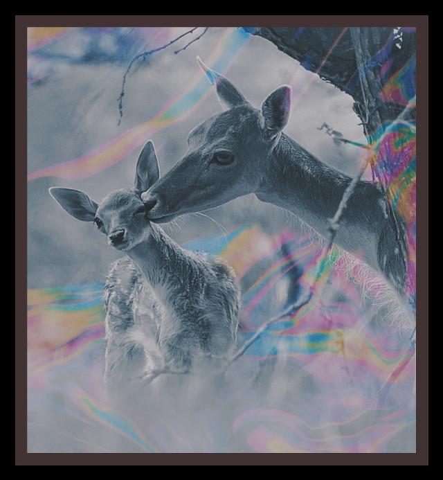 #deer #mama #baby #kiss #petsandanimals