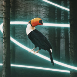 icyx heypicsart madewithpicsart shutterstock unsplash bird sitting toucan light line forest trees wild wildlife animal dark freetoedit remixit