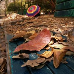freetoedit leaves auntum pcleavesisee leavesisee