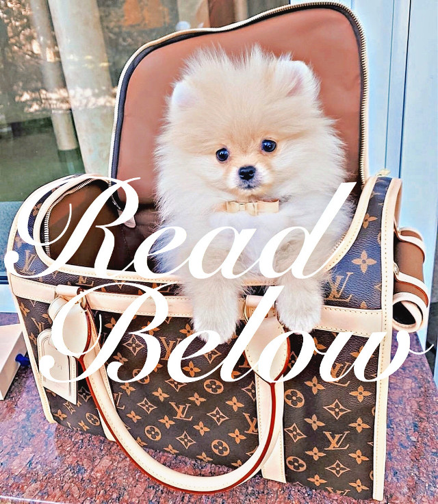 𝑆𝑝𝑎𝑚 𝑚𝑦 𝑐𝑜𝑚𝑚𝑒𝑛𝑡𝑠🤪.  𝐼 𝑤𝑎𝑛𝑛𝑎 𝑤𝑎𝑘𝑒 𝑢𝑝 𝑡𝑜 𝑚𝑜𝑟𝑒 𝑡ℎ𝑎𝑛 99+ 𝑚𝑒𝑠𝑠𝑎𝑔𝑒𝑠.  (𝑃𝑙𝑒𝑎𝑠𝑒 𝑜𝑛𝑙𝑦 𝑠𝑝𝑎𝑚 𝑡ℎ𝑖𝑠 𝑝ℎ𝑜𝑡𝑜 𝑎𝑛𝑑 𝑑𝑜𝑛'𝑡 𝑠𝑝𝑎𝑚 𝑚𝑦 𝐷𝑚'𝑠)  ~ℐ𝓉𝓏𝒶🐶🍪    #readbelow #dog