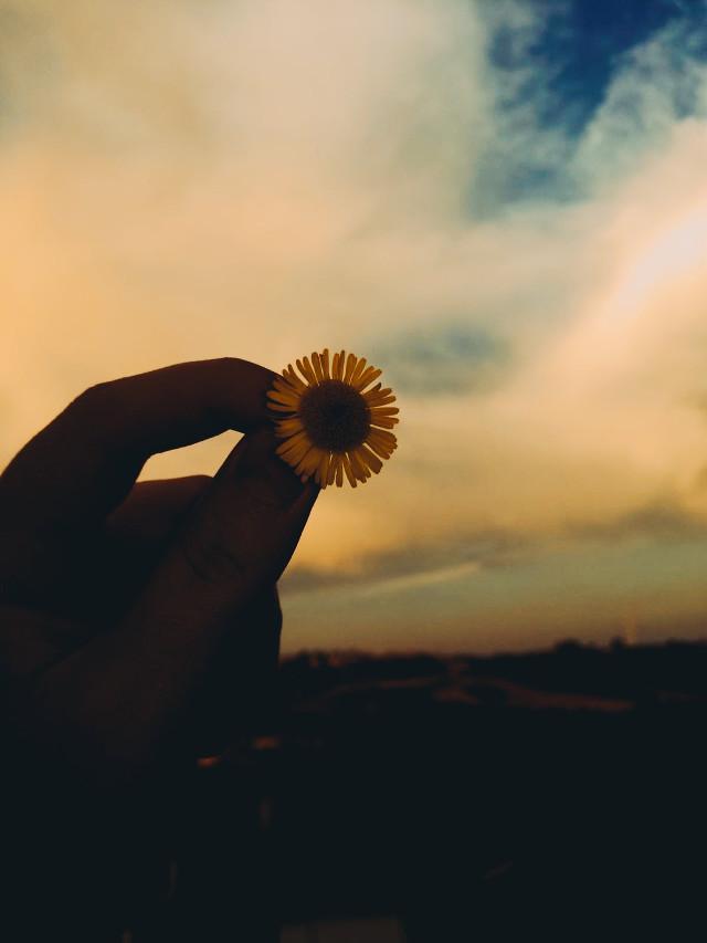 #myphoto #photography #photographer #photograph #photooftheday #photobyme #hd #newclick #lockscreen #background #flowers #horizon #clouds #nature #daisy #sunset #september #mobilephotography #colorful #positive #photo #wish #loveit   ᵐᵃᵏᵉ ᵃ ʷⁱˢʰ. ᵗᵃᵏᵉ ᵃ ᵖʰᵒᵗᵒ  Photo by: @daisylazyphotos