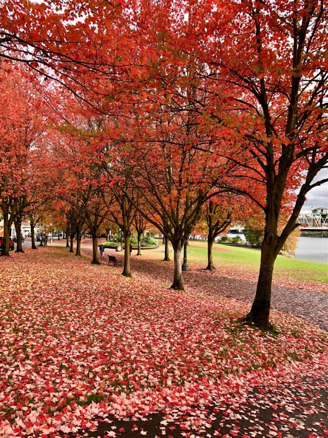 #leavesIsee