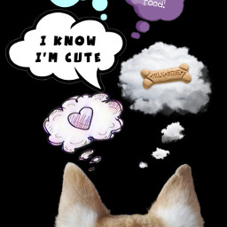 dog thoughts dogthoughts dogthought doglife dogslife dogsofpicsart freetoedit