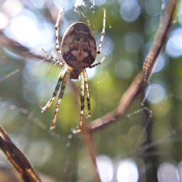 freetoedit photography closeup spider nature