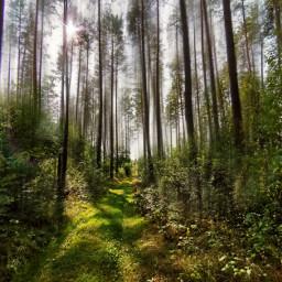 forest forestroad trees blureffect sunlight sunnyday beautifulday beautifulnature myphoto myedit myart madewithpicsart joannart becreative heypicsart picsartmaster freetoedit fc#expressyourselffall2020 #expressyourselffall2020