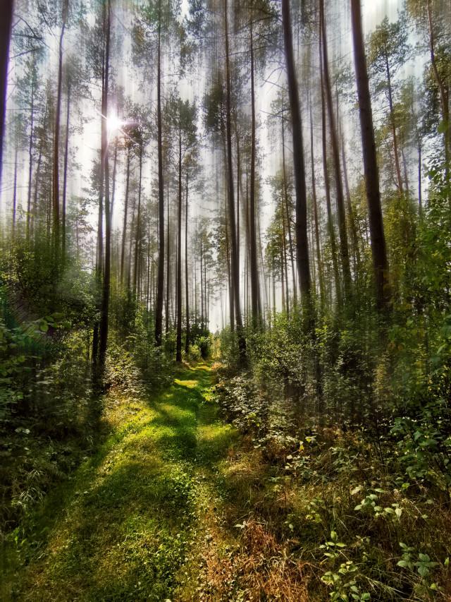 #forest #forestroad #trees #blureffect #sunlight #sunnyday #beautifulday #beautifulnature #myphoto #blureffect #myedit #myart #madewithpicsart @picsart #JoannArt #becreative #HeyPicsArt #picsartmaster