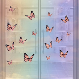 butterfly rainbow concours win ircfillthefridge fillthefridge