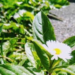 floweringarden sunny_day beautyofnature pcleavesisee leavesisee